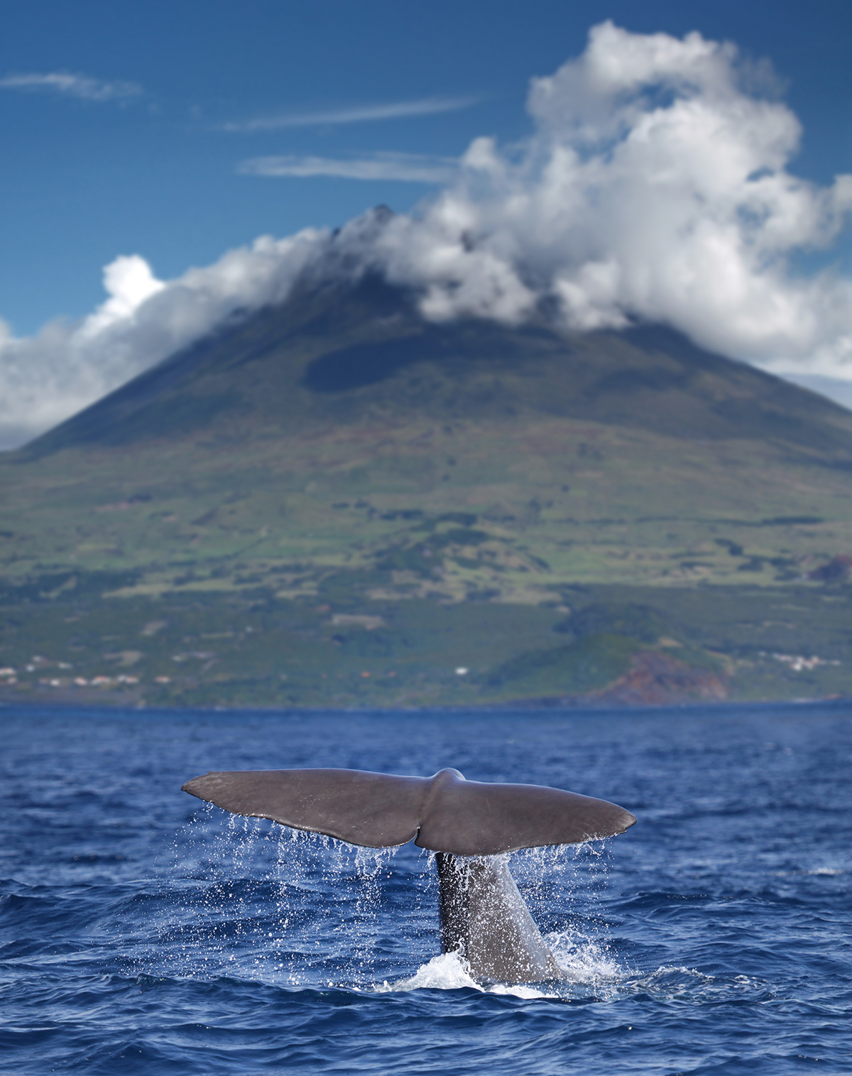 Sperm Whale Pico
